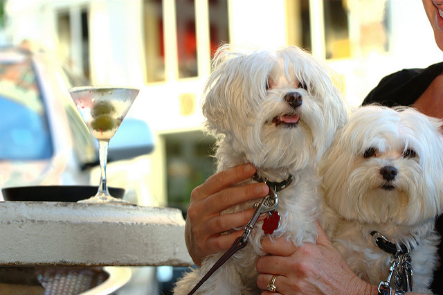The Best Dog-Friendly Bars, Cafes, And Restaurants Around