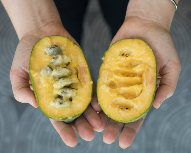 Pawpaw Season Is Upon Us Here S Where To Get Your Paws On Some Of These Mid Atlantic Tropical Fruits Dcist
