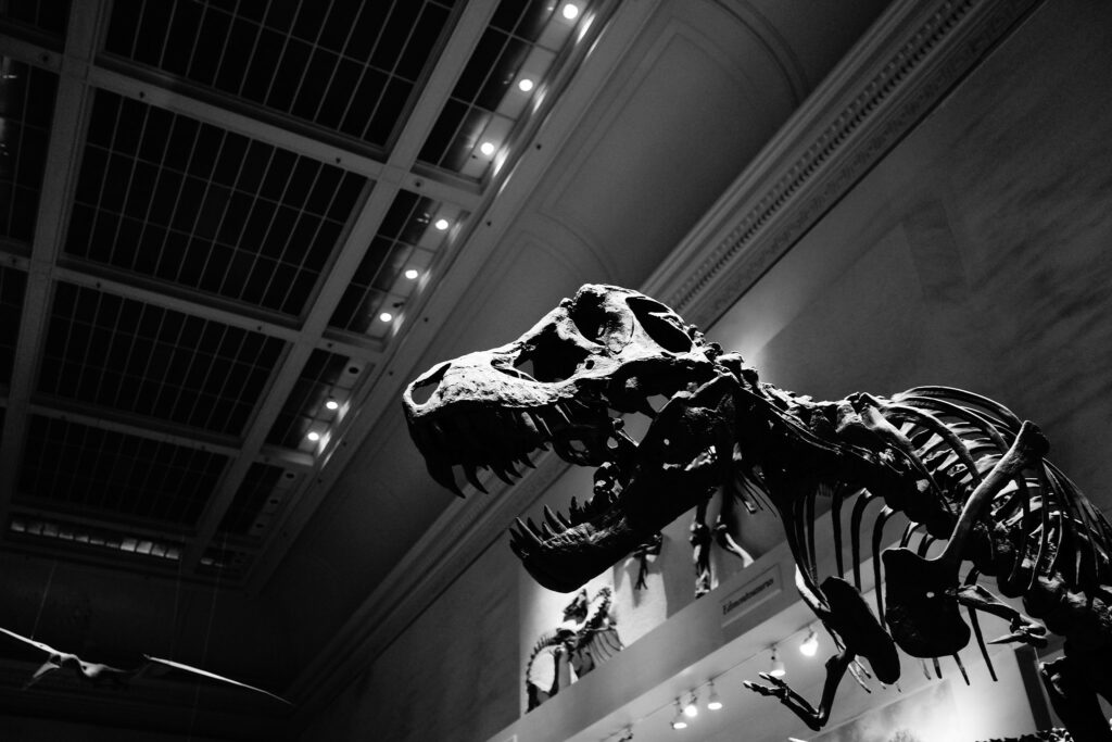 A DC Public Library Is Holding A Dinosaur-Roaring Contest | DCist